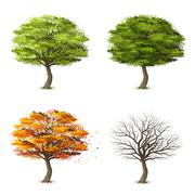 Trees in four seasons - stock illustration