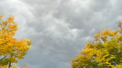 Trees Swaying in a Fall Storm Stock Footage