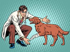 Vet dog wounded paw Stock Illustration