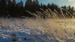 Blades of frozen grass, playing in the wind, the camera moves to the right Stock Footage