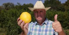 Farmer Inspect Best Ripe Juicy Grapefruit Ok Hand Sign Tropical Exotic Citrus Stock Footage