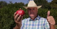 Farmland Worker Verify Pomegranate Ripe Fruit Thumbs Up Cultivator Test Gesture - stock footage