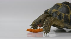 Ungraded: Russian Tortoise Eating Carrot Stock Footage
