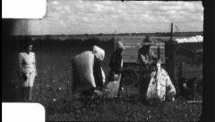 Men Weigh Cotton in Field Harvest Sharecropper 1930 Vintage Film Home Movie 8810 Stock Footage