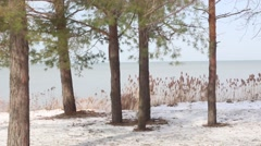 Wintery pines and dry grass swaying by the lake shore Stock Footage