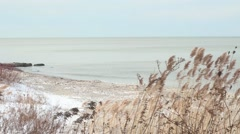 Wintery tall dry grass by Lake Erie shore Stock Footage