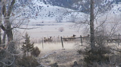 Elk bedded on ranch property  Stock Footage