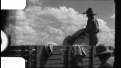 Men Load Cotton in Field Truck Harvest 1930s Vintage Film Home Movie 8815 Stock Footage