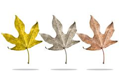 Three kind of seasonal leaves Stock Photos