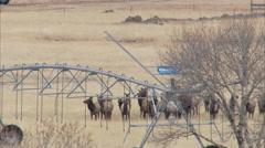 Elk cross ranch property  Stock Footage