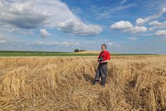 Farmer or agronomist inspect damaged wheat field - stock photo