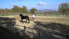 UMBRIA, ITALY - Man trains a black horse in open manege - stock footage