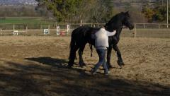 UMBRIA, ITALY - Man trains a black horse in open manege Stock Footage