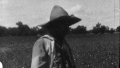 Woman Picking Cotton Field Sharecropper 1930s Vintage Film Home Movie 8820 Stock Footage