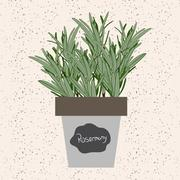 Vector - Fresh rosemary herb in a flowerpot. Aromatic leaves used to season m Stock Illustration