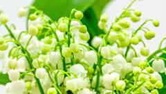 Lily of the valley (bellflower) timelapse Stock Footage