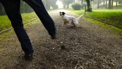 Active young setter plays fetch at park. Slow motion. Stock Footage