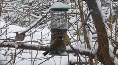 Birds feeding in winter Stock Footage