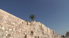 Tree on wall zoom in Amman city Jordan Stock Footage