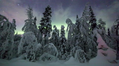 Aurora Borealis (Northern Lights) in the sky timelapse above lappland forest Stock Footage