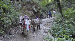 Transport mules going down on mountain path in India - stock footage