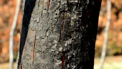 Detail of charred tree in forest - texture Stock Footage
