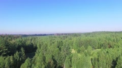 Forest area with White mountain and plant on horizon at summer Stock Footage