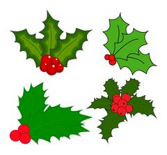 Holly berry, Christmas leaves and fruits icon, symbol, design. Winter vector  Stock Illustration
