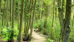 View of the wooden path in the evegreen forest - close up Stock Footage