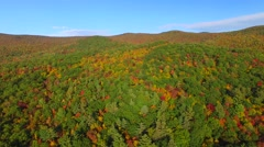 New England forest in foliage season - stock footage