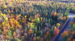 Forest road of New England in foliage season Stock Footage