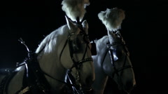 White Carriage Horses Stock Footage
