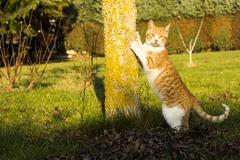 Cat leaning on Tree and Looking into Camera - stock photo