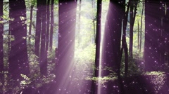 4K Sun Shines through Leaves in Mysterious Deep Forest 1 magic fireflies Stock Footage