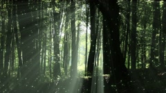 4K Sun Shines through Leaves in Mysterious Deep Forest 3 magic fireflies Stock Footage