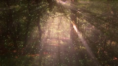 4K Sun Shines through Leaves in Mysterious Deep Forest 6 magic fireflies Stock Footage