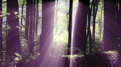 4K Sun Shines through Leaves in Mysterious Deep Forest 7 Stock Footage