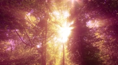 4K Sun Shines through Leaves in Mysterious Deep Forest 14 Stock Footage