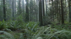 Pacific Northwest Lush Forest Floor dolly shot Stock Footage