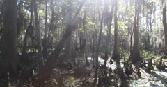 Louisiana Swamp Bayou Spinning Up Shot Stock Footage