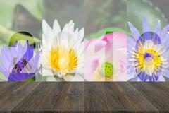 Wood terrace and Happy New Year 2016 in Lotus Flower Theme Stock Photos