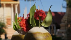 Coconut with flower for offering at temple,Kratie,Cambodia Stock Footage