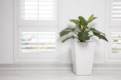 White office wall,  window and green tree Stock Photos