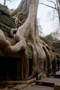 Tree roots overwhelm ancient temple walls Stock Photos