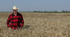Satisfied Farmer Stay Straight Looking Camera Wheat Field Culture Food Industry Stock Footage