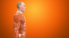 3D human body Anatomy orange background Stock Footage