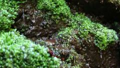 Water from beautiful small brook in forest Stock Footage