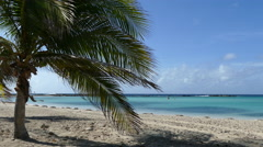 Palmtree at Baby Beach on Aruba Stock Footage