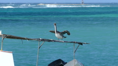 Pelican at a small fishing boat on Aruba try to keep in balans Stock Footage