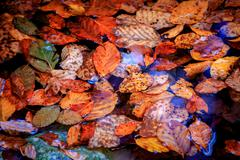 Atumn leafs in water Stock Photos
